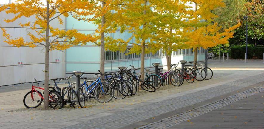 Bicycles outside the Faculty of Law